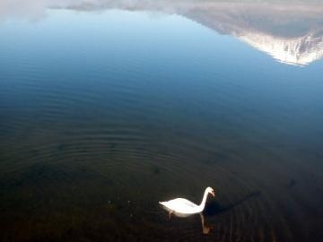 paisible dans le lac yamanakako © y estienne