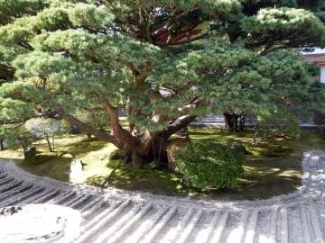 jardin zen kyoto © y estienne.JPG
